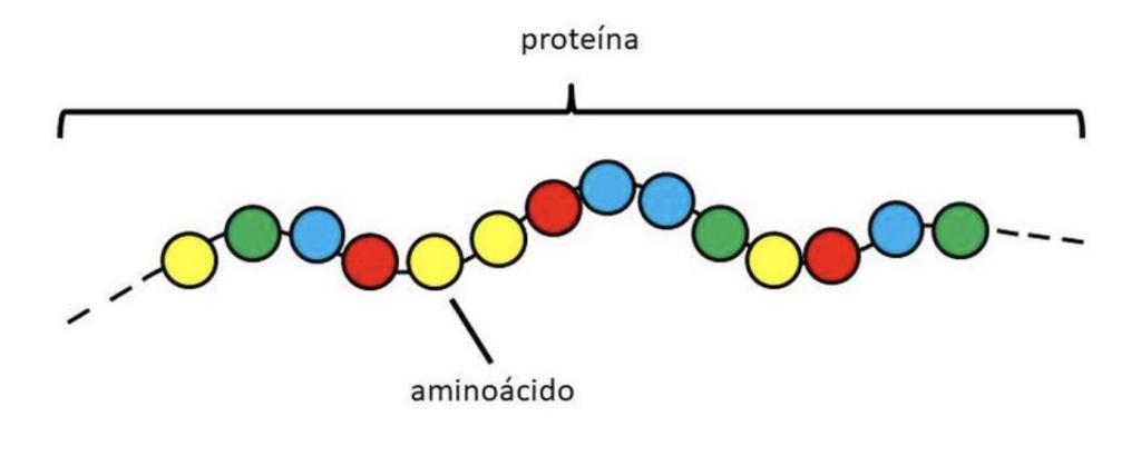 Introducción a las proteinas I